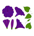 isolation elements of violet or blue bindweed vector image vector image
