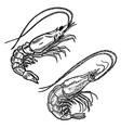 shrimp in engraving style design element for logo vector image vector image