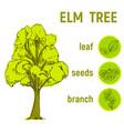 color sketch an elm vector image vector image