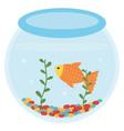 fish pet in aquarium vector image vector image