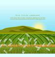 rice fields landscape sunshine background vector image vector image