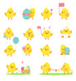 set yellow chickens vector image vector image