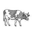 hand drawn cow sketch engraved style isolated on vector image