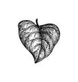 ink sketch heart shaped leaf vector image