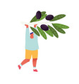 man holding olive branch with black berries vector image vector image