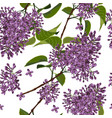 seamless pattern with spring lilac flowers vector image vector image
