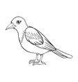 animal outline for bird vector image vector image