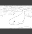beluga whale in an arctic sea vector image vector image