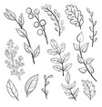 doodle leaves and plants vector image