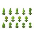 Isometric tree vector image vector image