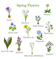 spring flowers set vector image