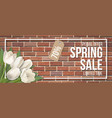 spring sale frame red brick white tulip vector image vector image
