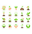sprout simple flat color icons set vector image vector image