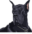 black dog Great Dane breed vector image