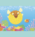 blowfish and butterflyfish among corals vector image