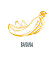 hand drawn banana on white background vector image vector image