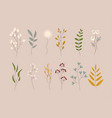 herbs and wild flowers cute floral elements flat vector image