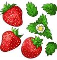 Set ripe juicy strawberries vector image