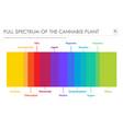 full spectrum cannabis plant horizontal vector image vector image