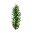 one single realistic spruce or pine branch leaf vector image vector image