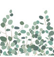 seamless pattern with eucalyptus hand painted vector image