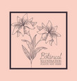 square frame with lily flowers drawn vector image