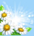 background with chamomiles vector image
