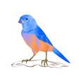 bluebird thrush small songbirdond vector image vector image