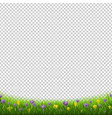 crocus flowers border with grass transparent vector image vector image