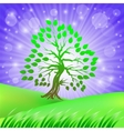 Green Tree vector image vector image