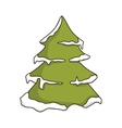 green pine tall tree vector image