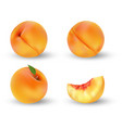 realistic ripe peach fruit isolated on white vector image vector image