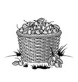 retro basket cherries black and white vector image vector image