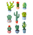 Set colorful green cactus in pot for home