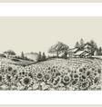 sunflower field vector image vector image