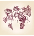 bunch grapes vector image vector image