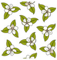 seamless pattern with white spring flowers vector image vector image