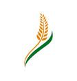 wheat grain and wheat rice logo inspiration vector image vector image