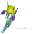 Yellow iris watercolor vector image