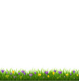 flowers border with grass vector image vector image