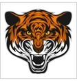Tigers Face of a tiger head vector image vector image