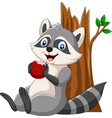 cartoon raccoon eating a red apple vector image vector image