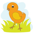 Chicken on the green grass vector image vector image