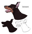 dobermann panting with tongue out watchdog vector image vector image