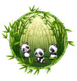 pandas are playing in bamboo vector image