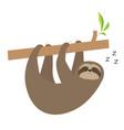 sleeping sloth hanging on tree branch cute vector image vector image
