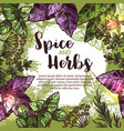 spice and herb poster with frame of fresh plant vector image vector image