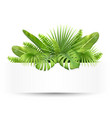 banner with tropical leaves vector image vector image
