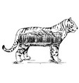 stylized decorative tiger ink hand drawn vector image