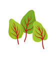three green sorrel leaves with red veins culinary vector image vector image